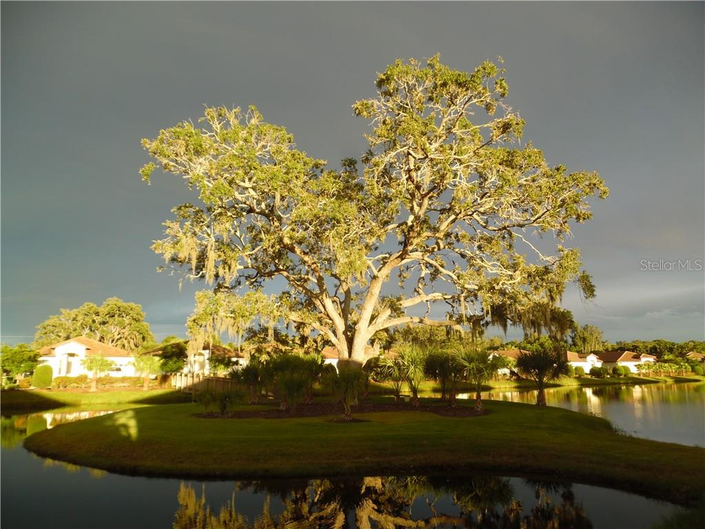 bright sunset on the Grand Oak - Single Family Home for sale at 239 Nolen Dr, Venice, FL 34292 - MLS Number is N6101457